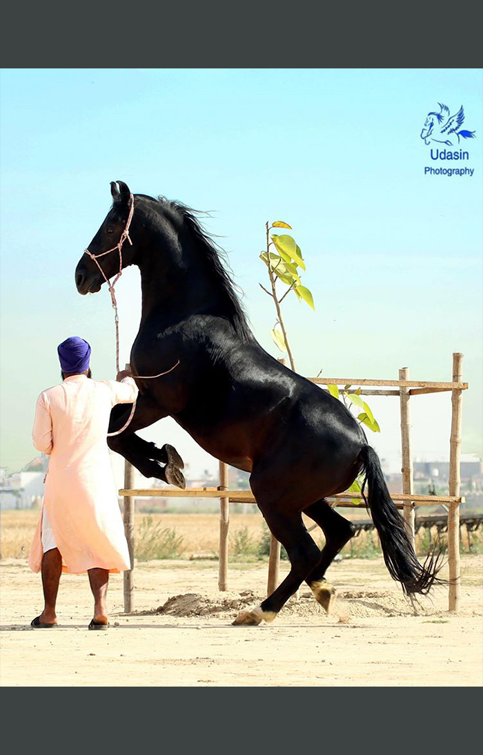 Singh with horse