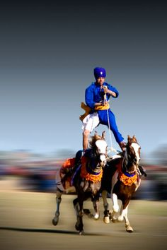 Nihang on Horses